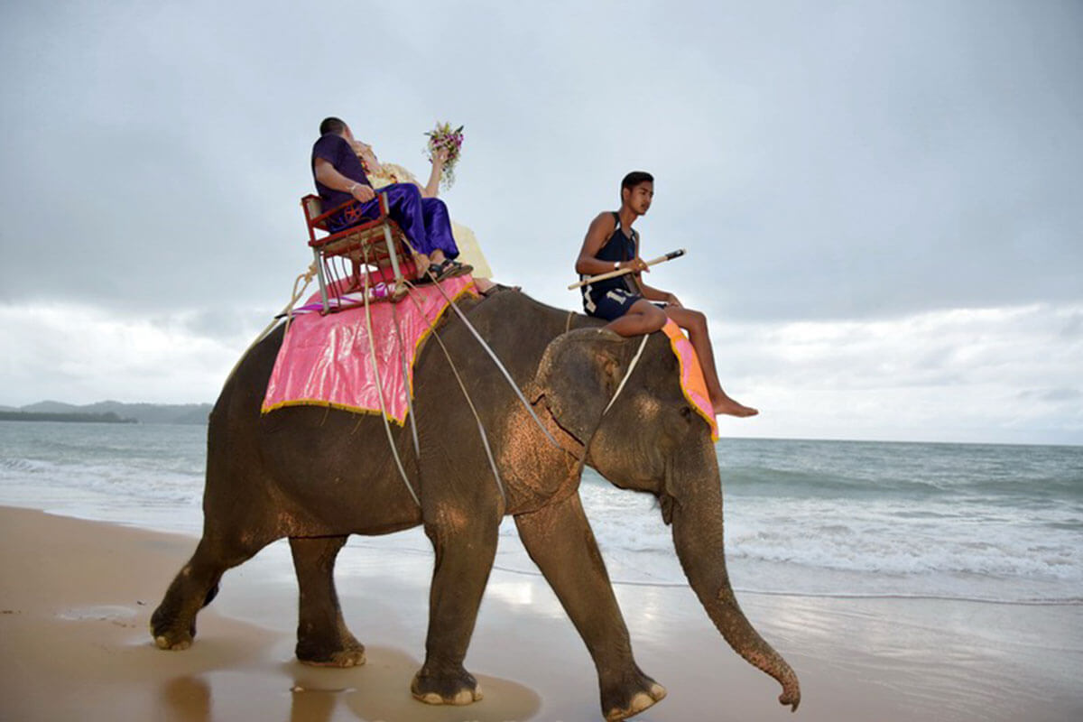 Promotion Khaolak Beach Elephant Wedding Package