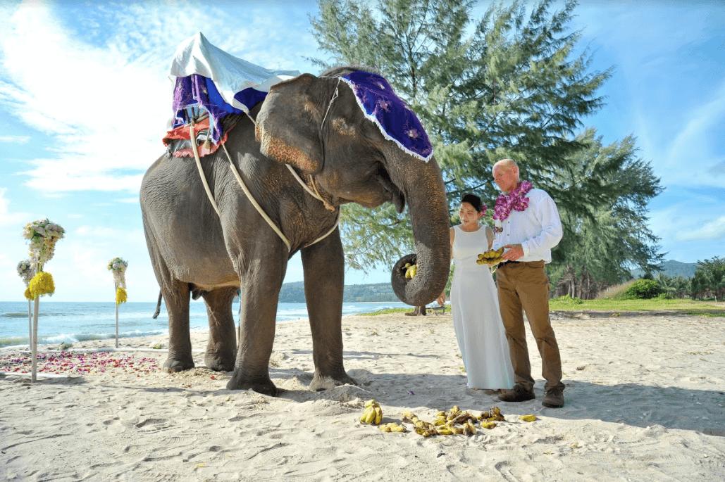 沙灘上的佛教婚禮:與大象同行